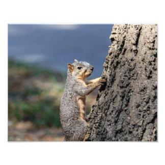 Gray Squirrel Photo Print