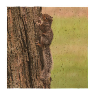 Gray Squirrel Drink Coaster