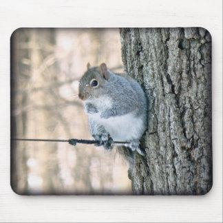Gray Squirrel - Sciurus carolinensis Mouse Pad