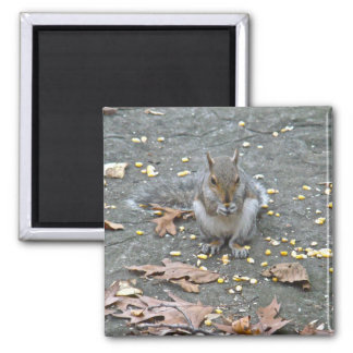 Gray Squirrel Series Magnet