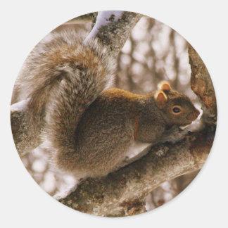 Gray Squirrel Stickers