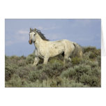 Gray Stallion Comes Down Hill Horse Greeting Card