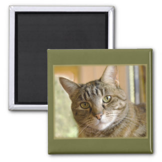 Gray Tabby Close Up Photograph 2 Inch Square Magnet