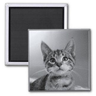 Gray Tabby Kitten Magnet