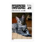 Gray Tabby Kitten Postage Stamp | Photo Stamp