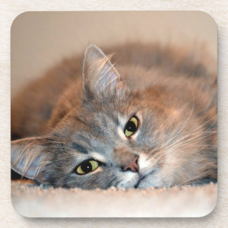 Gray, Tan, White Long-Haired Cat by Shirley Taylor Beverage Coaster