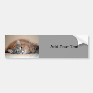 Gray, Tan, White Long-Haired Cat by Shirley Taylor Bumper Sticker