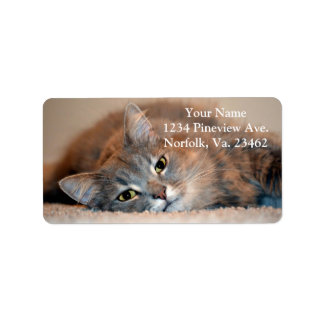 Gray, Tan, White Long-Haired Cat by Shirley Taylor Label