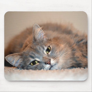 Gray, Tan, White Long-Haired Cat by Shirley Taylor Mouse Pad