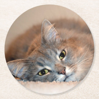 Gray, Tan, White Long-Haired Cat by Shirley Taylor Round Paper Coaster