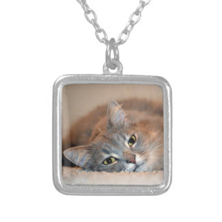 Gray, Tan, White Long-Haired Cat by Shirley Taylor Silver Plated Necklace