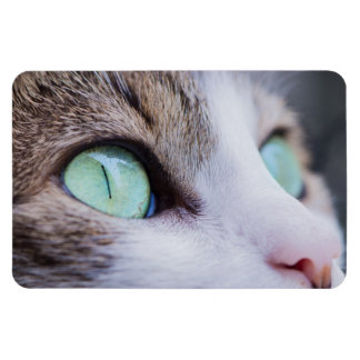 Gray Tiger Cat with Bright Green Eyes Magnet