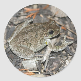 Gray Tree Frog Classic Round Sticker