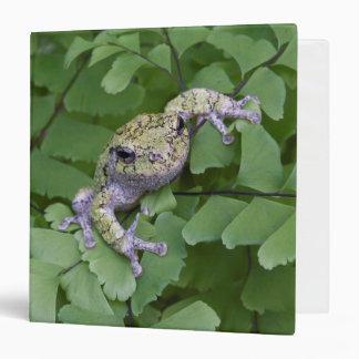 Gray tree frog on fern, Canada Binder
