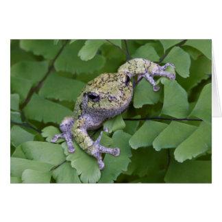 Gray tree frog on fern, Canada Card