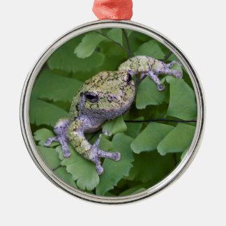 Gray tree frog on fern, Canada Metal Ornament