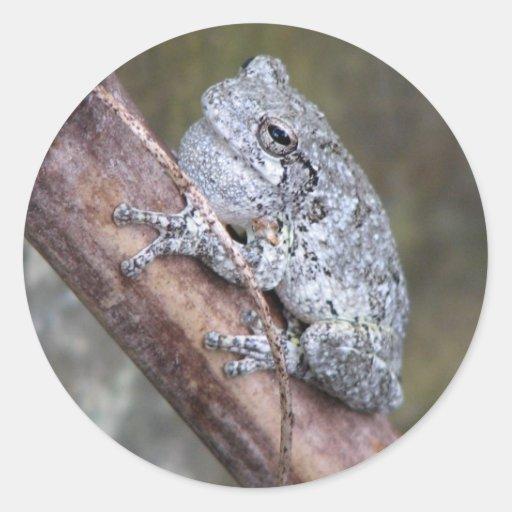 Gray Tree Frog Sticker