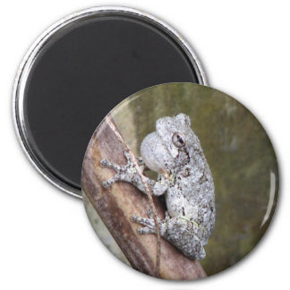 Gray Treefrog Croaking 2 Inch Round Magnet