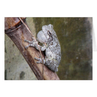 Gray Treefrog Croaking Card