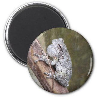 Gray Treefrog Croaking Magnet