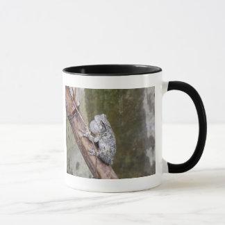 Gray Treefrog Croaking Mug