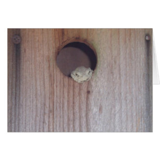 Gray Treefrog in a Box Card