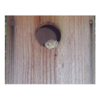 Gray Treefrog in a Box Postcard