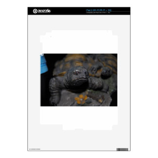 Gray Turtle Skins For The iPad 2