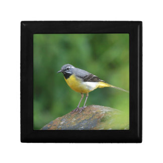 Gray Wagtail - bird Jewelry Box