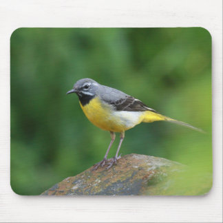 Gray Wagtail - bird Mouse Pad