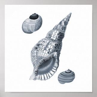 Gray Wall art Seashell art print #12 Beach decor