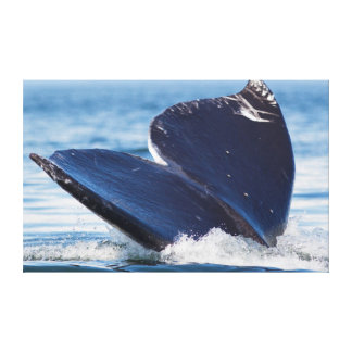 Gray Whale Diving, Hood Canal, Washington State Canvas Print