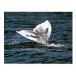 Gray whale postcard