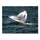 Gray whale postcards
