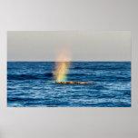 """Gray Whale """"Rainblow"""" Print"""