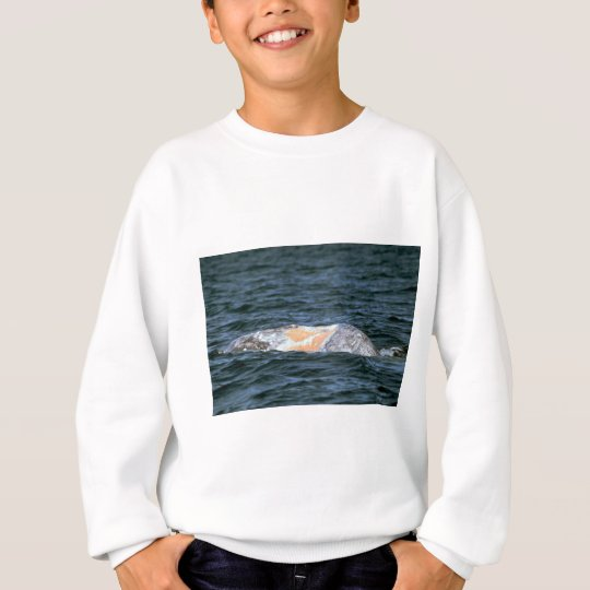 Gray whale sweatshirt