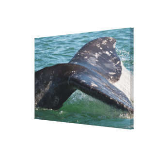 Gray Whale Tail Canvas Print