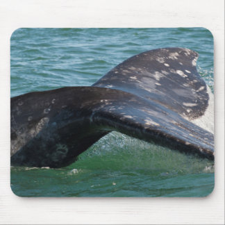 Gray Whale Tail Mouse Pad