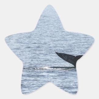Gray Whale Tail Star Sticker