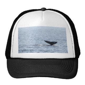 Gray Whale Tail Trucker Hat