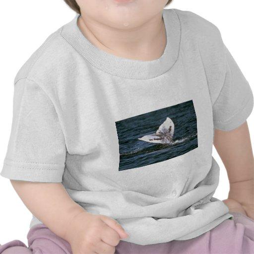 Gray whale tshirt
