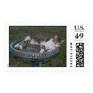 Gray & White cat 2 Stamps