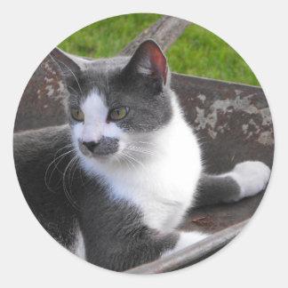 Gray & White Cat Sticker