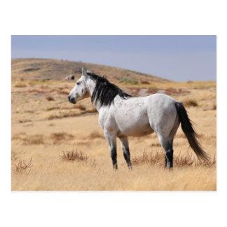 Gray Wild Horse on Range, Utah Postcard