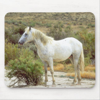 Gray Wild Horse, Rock Springs, Wyoming Mouse Pad