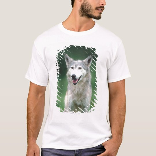 Gray wolf 2 T-Shirt