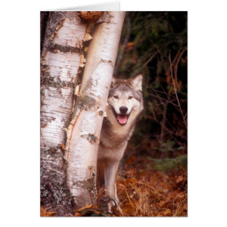 Gray Wolf Behind a Tree Card