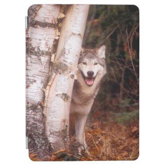 Gray Wolf Behind a Tree iPad Air Cover