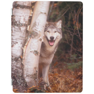 Gray Wolf Behind a Tree iPad Smart Cover