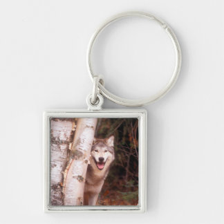 Gray Wolf Behind a Tree Keychain
